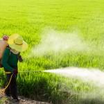 Estes Alimentos Contêm a Maior Quantidade de Pesticidas (O 1o Deve Ser Evitado a Todo Custo)