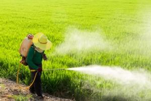 Estes Alimentos Contêm a Maior Quantidade de Pesticidas