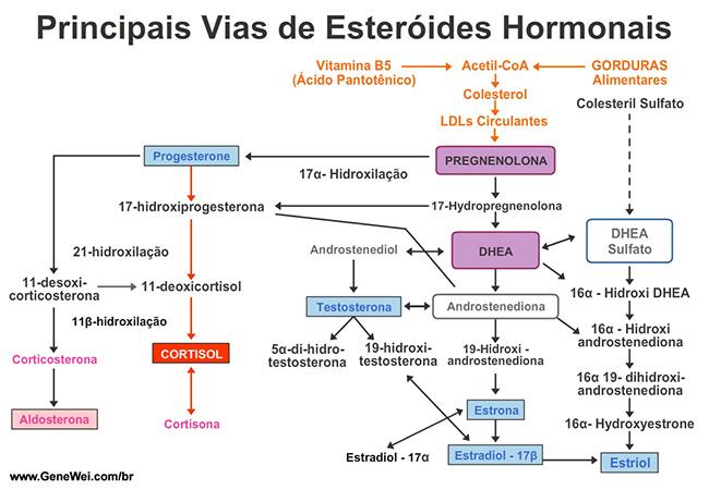 Principais Vias de Esteroides Hormonais
