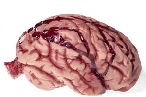 Isto É O Que Refrigerantes Fazem Ao Seu Cérebro (Novo Estudo)